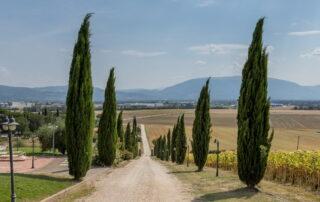 Viale alberato del agriturismo con vista su Assisi